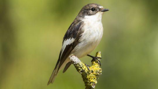 En dansk naturskat er fugle i naturen
